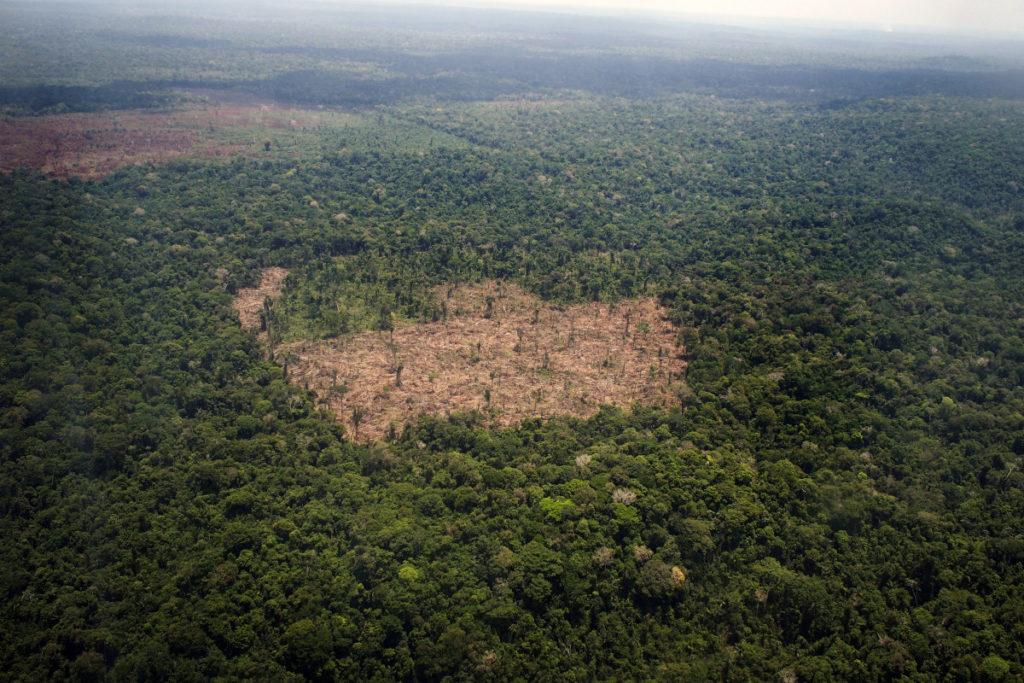 Amazon Forest Is Going Through Deforestation In Spite Of Having Rainy Season